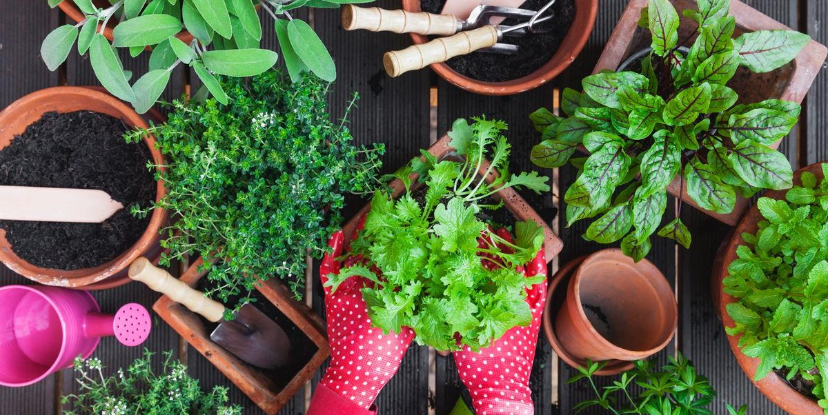8 herbs to grow at home