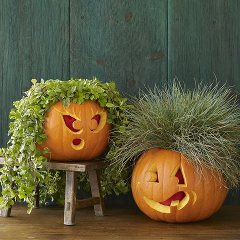 plant people pumpkins
