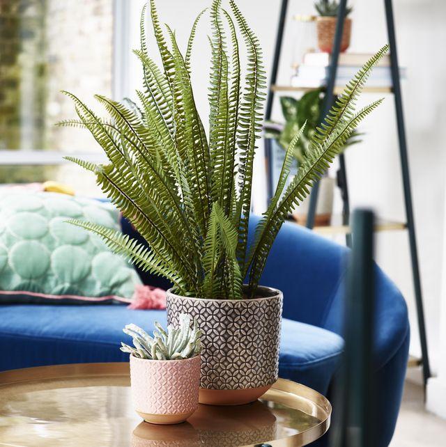 best indoor plant pots for house plants   indoor planters