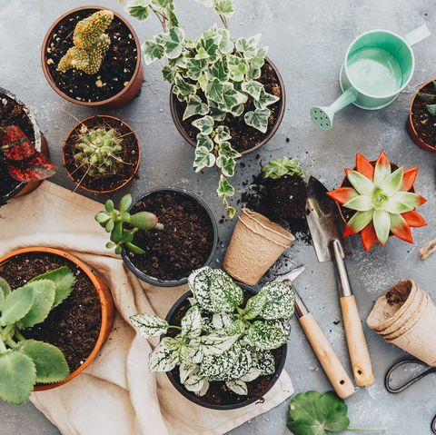 Plant pots on table inside
