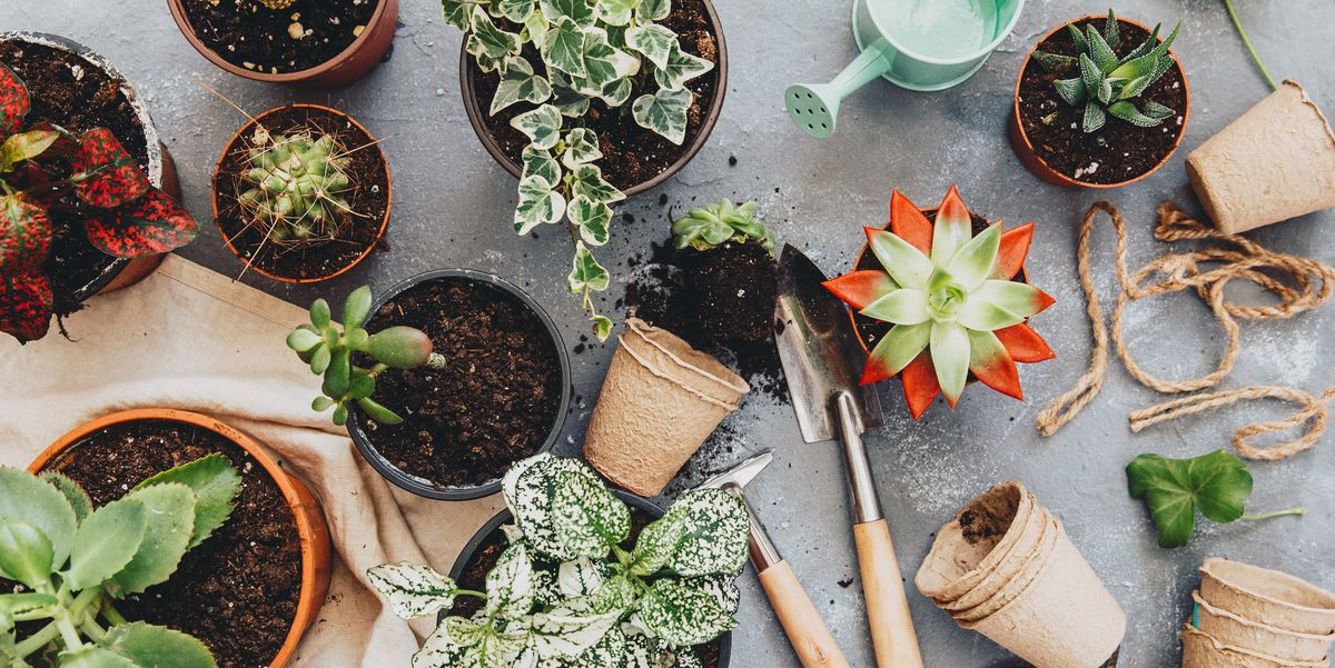 6 Clever Alternatives To Traditional Plant Pots