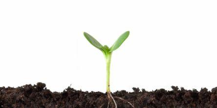 plant-root.jpg