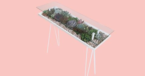 Cactus, Flowerpot, Plant, Grass, Tree, Shrub, Flower, Table, Houseplant, Rectangle,