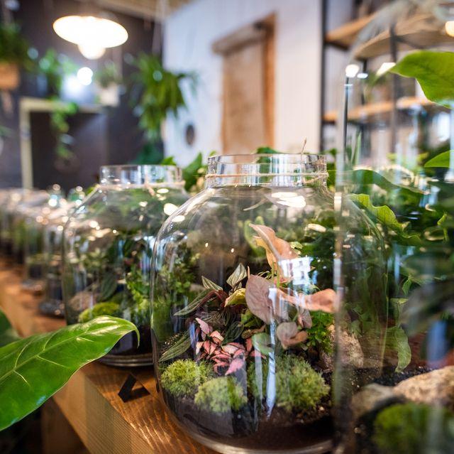 plant terraria on desk in flower shop
