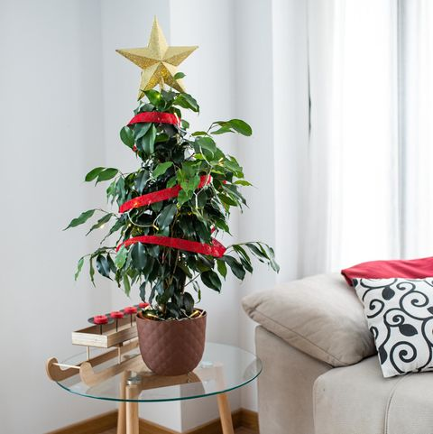 Planta Claus de HomyJungle