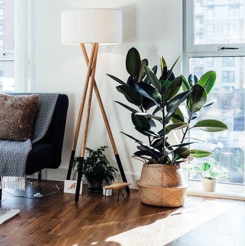 salón con planta ficus