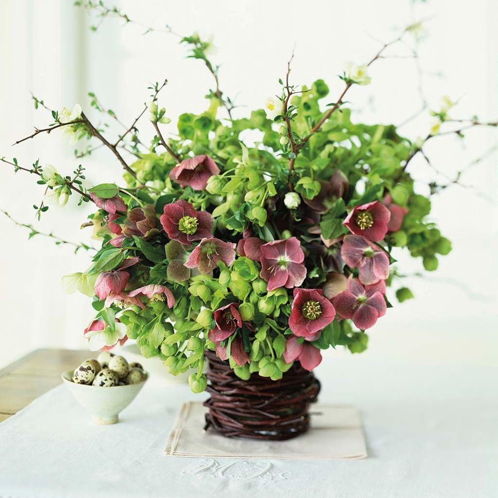 Eleboro: plantas de invierno