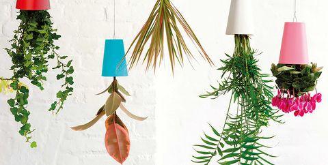 oregon pine, Colorado spruce, Christmas decoration, Tree, Fir, Christmas ornament, Pine, Branch, Conifer, Christmas tree,