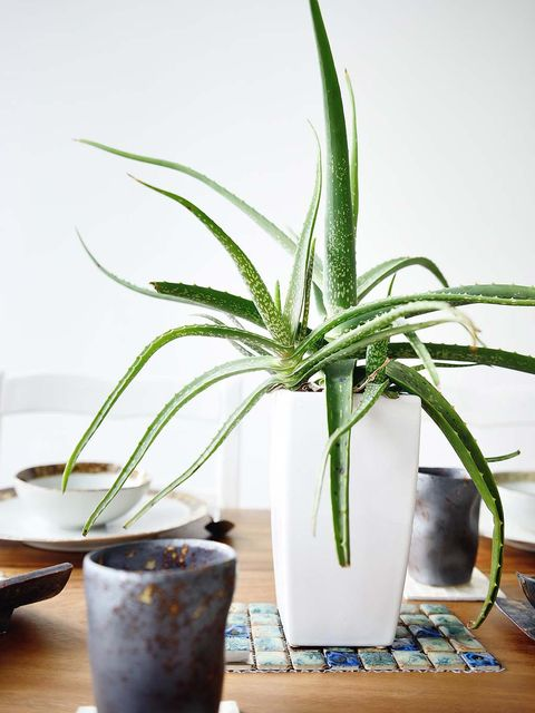 Houseplant, Flowerpot, Plant, Flower, Terrestrial plant, Aloe, Leaf, Xanthorrhoeaceae, Plant stem, Arecales,