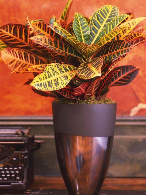 Flowerpot, Houseplant, Leaf, Plant, Flower, Terrestrial plant, Vase, Arrowroot family, Perennial plant,