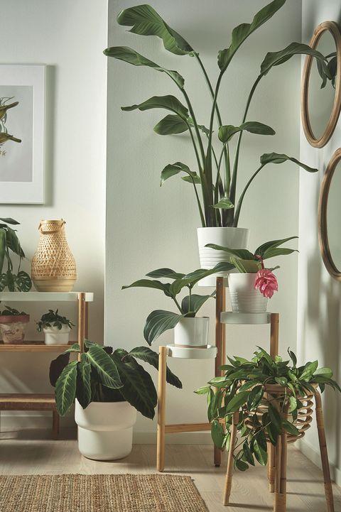 plantas de interior macetas de ikea
