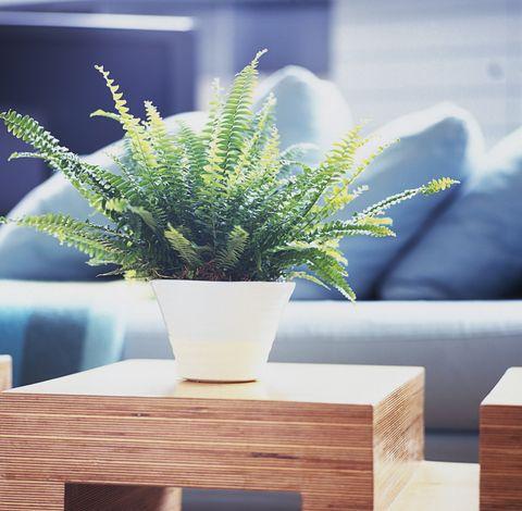 8 plantas de interior que sobrevivir n al fr o invierno - Plantas resistentes de interior ...