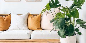 Las plantas que no pueden faltar en tu casa para repeler los mosquitos