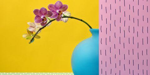 Plantas para el dormitorio. Orquídea