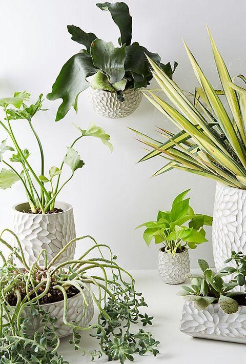 Plantas De Interior Resistentes Plantas De Interior Que Necesitan - Plantas-de-interior-resistentes