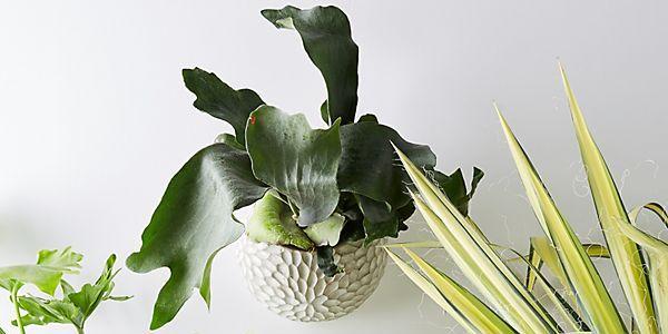 Plantas de interior fáciles de cuidar