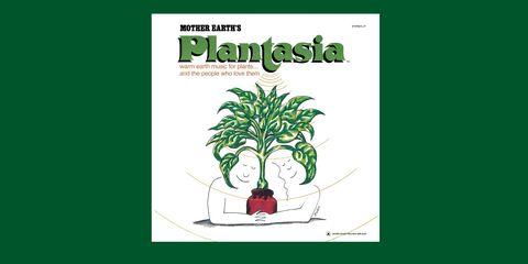 Green, Plant, Botany, Organism, Tree, Houseplant, Illustration, Font, Herb, Graphic design,