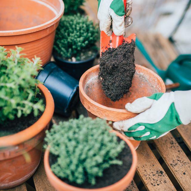 planting up pots in garden