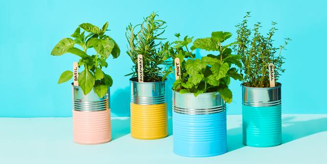 Indoor Herb Garden Ideas, Countertop Herb Garden