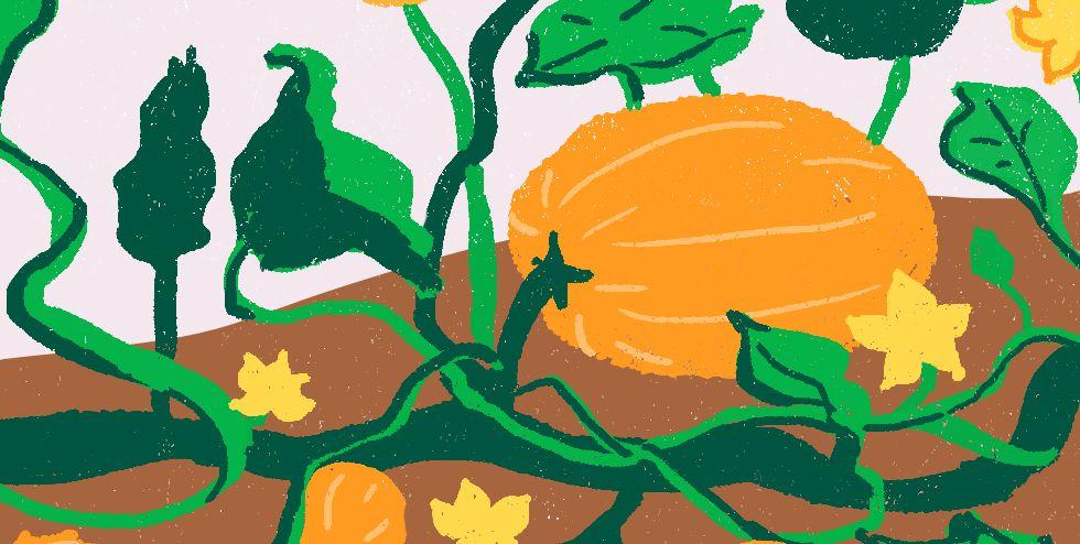 planting pumpkin seeds