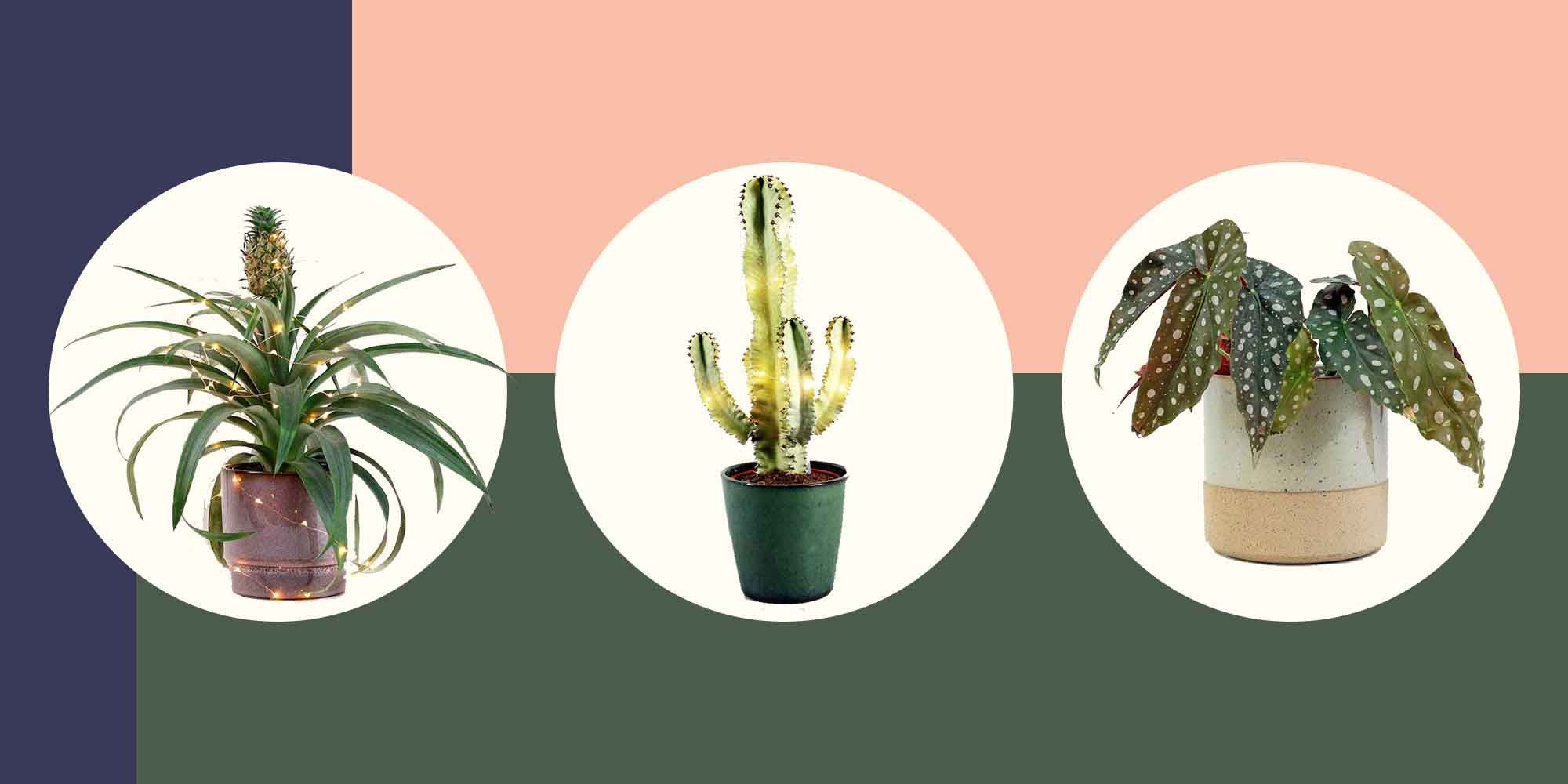 7 beautiful and unique plants to buy from Bloombox Club's new Christmas collection