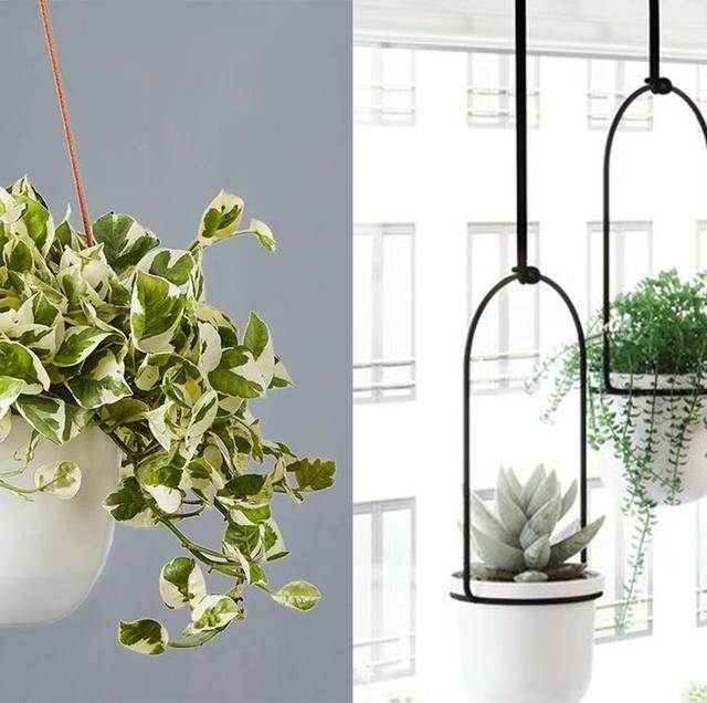 The 20 Best Indoor Hanging Plants to Hit Peak #PlantMom