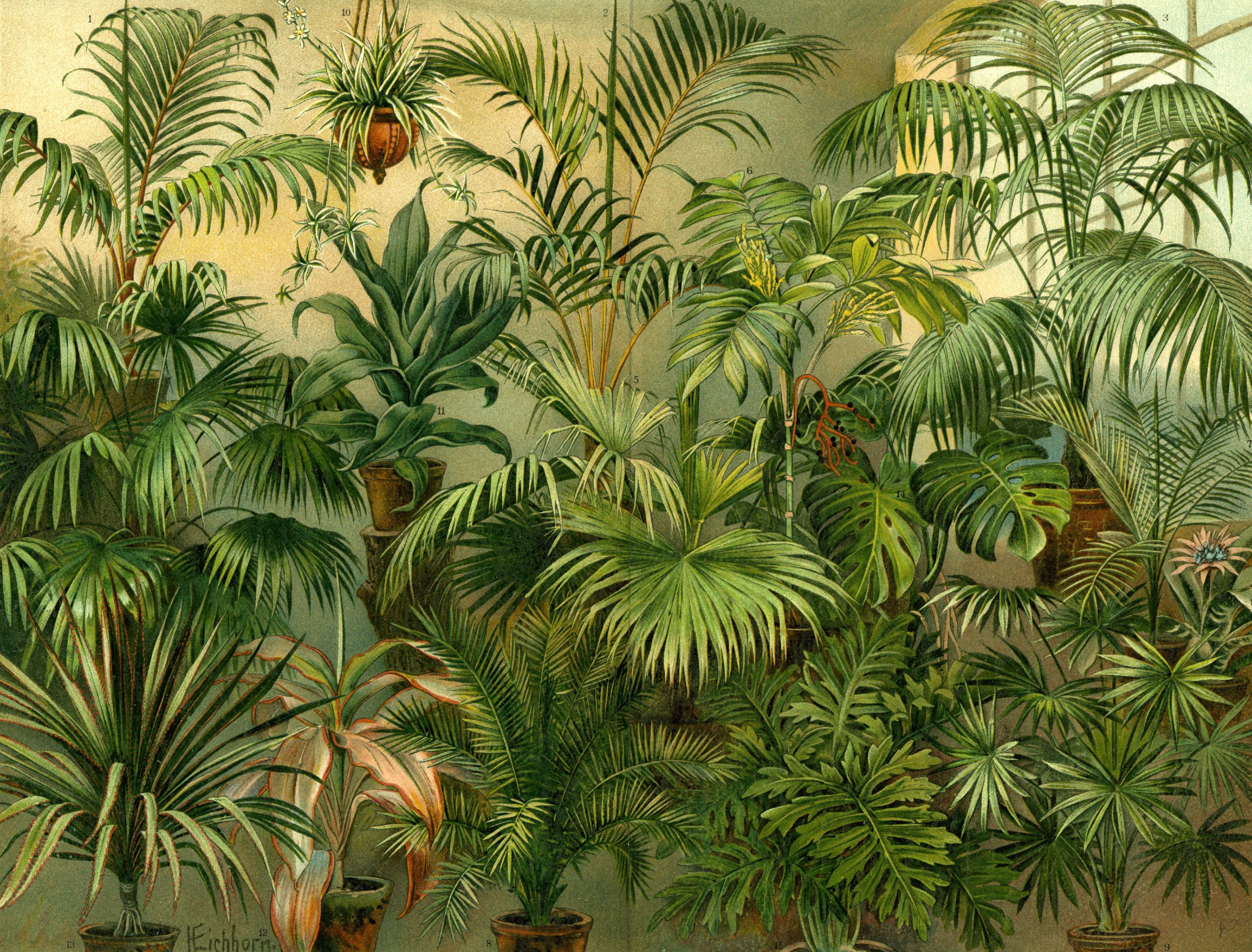 Piante Da Appartamento Ambiente Buio 10 piante da appartamento comprare su amazon per ogni esigenza