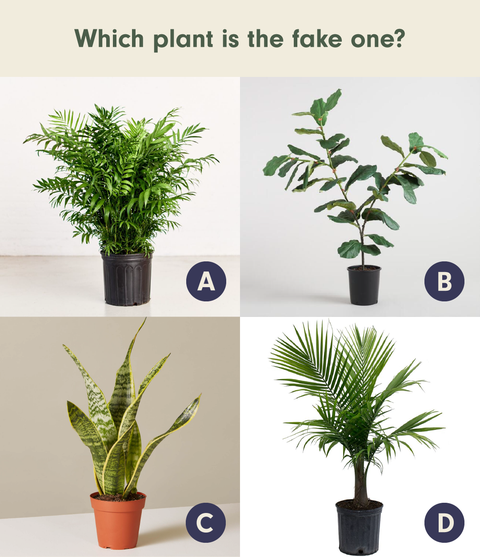 Can You Tell The Real Houseplants From The Fake One