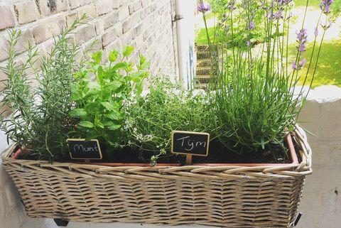 Plants Growing In Window Box Outside House