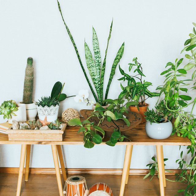 23 Best Small Indoor House Plants
