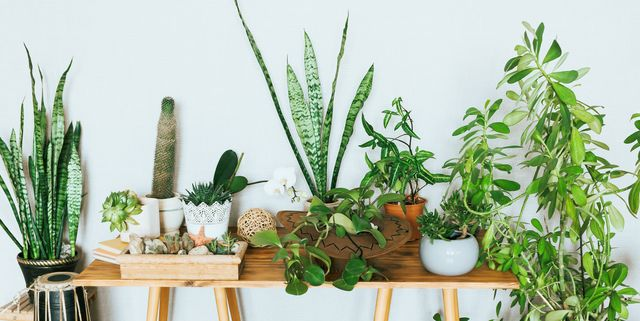 23 Best Small Indoor House Plants - Easy House Plants for Beginners