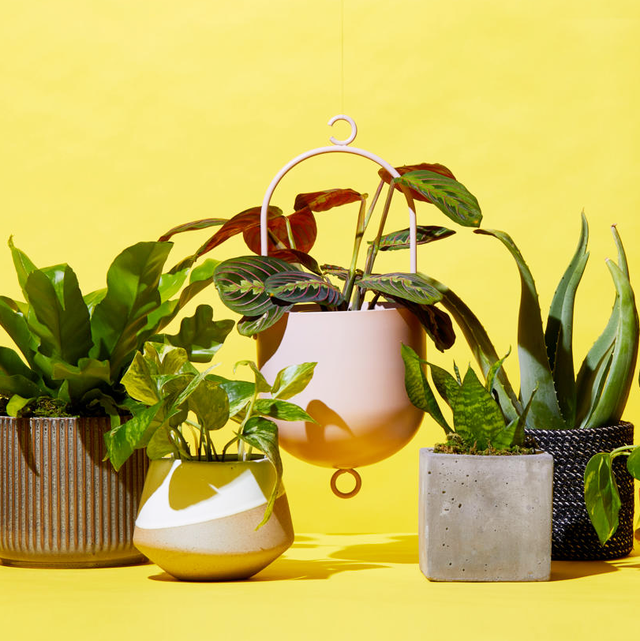 The Best Places to Buy Plants Online - Cheap Indoor Plants to Order