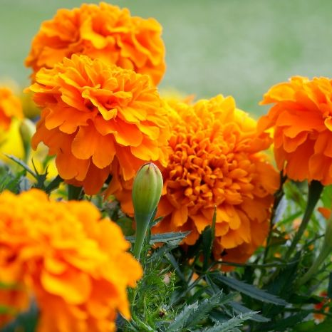 7 plants that are proven to repel spiders naturally
