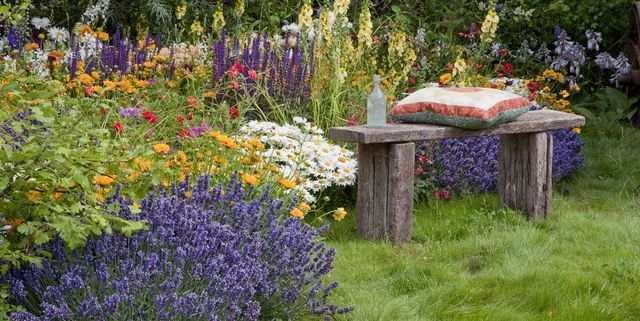 12 Plants That Repel Mosquitoes Natural Mosquito Repellent Plants