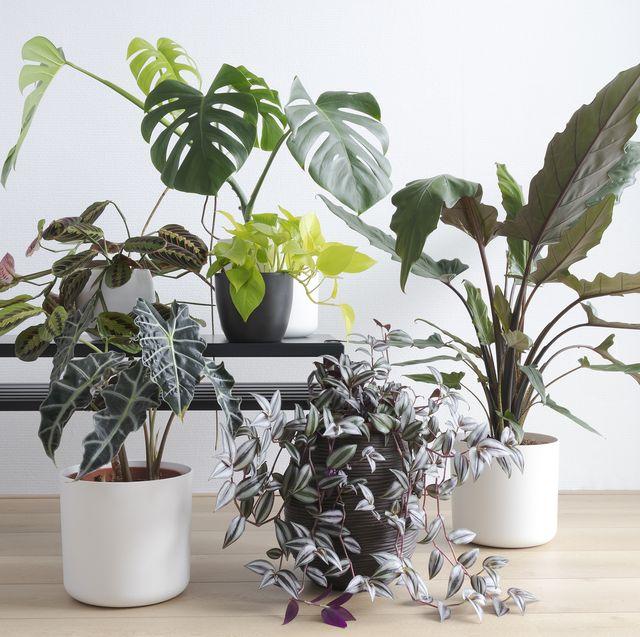 houseplants in white living room