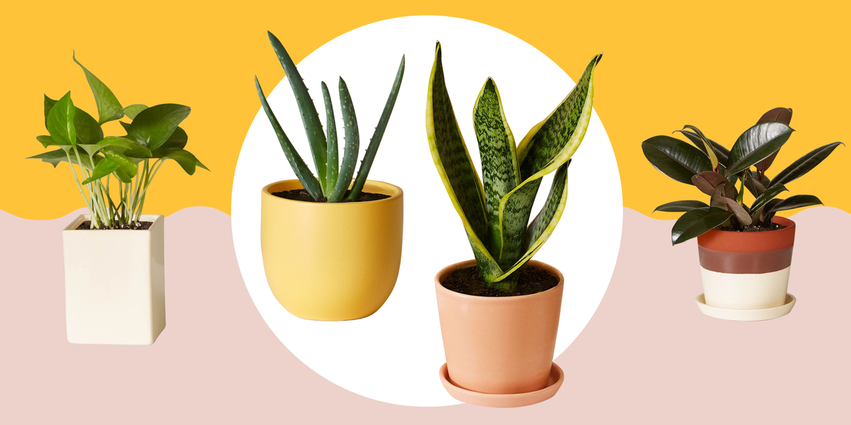 11 Best Indoor Plants For Your Home — Air-Purifying Plants