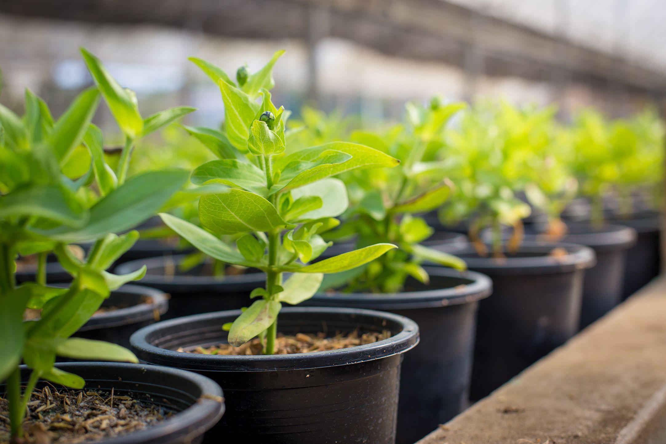 Dobbies Garden Centres now lets you return your unwanted plastic plant pots
