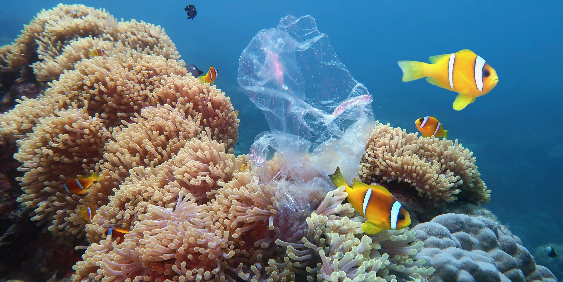 Plastic verbruik