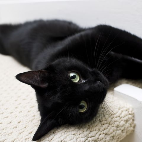 black cat laying on a cream rug