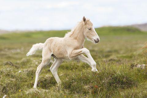 playful foal