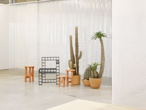 Flowerpot, Interior design, Curtain, Houseplant, Floor, Room, Cactus, Tile, Furniture, Wall,