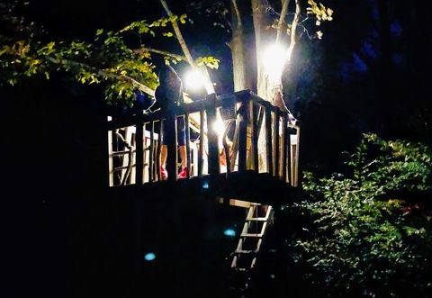 Night, Light, Darkness, Tree, Lighting, Sky, Midnight, Branch, Architecture, Plant,