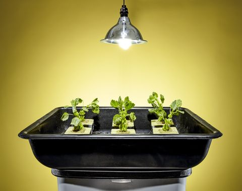 Garden All Winter With This Hydroponic System Hydroponic Plans