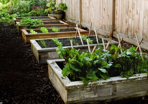 How To Start A Garden Build This Raised Garden Bed