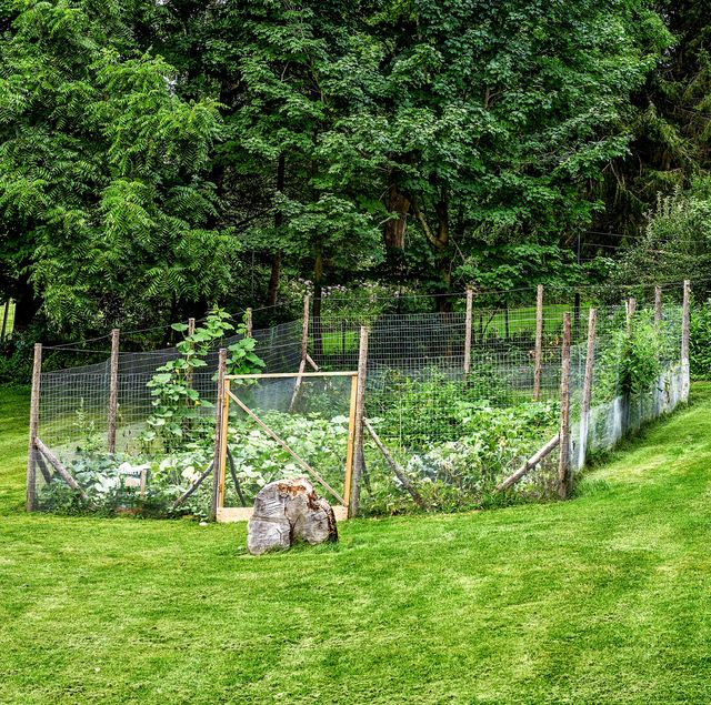 How To Make A Great Garden Fence Diy