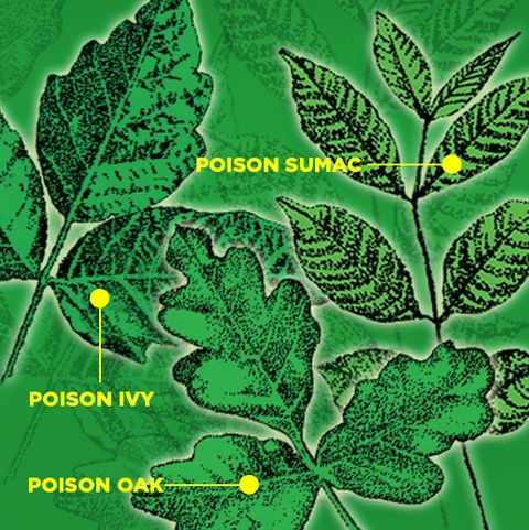 How to Protect Yourself from Poison Ivy