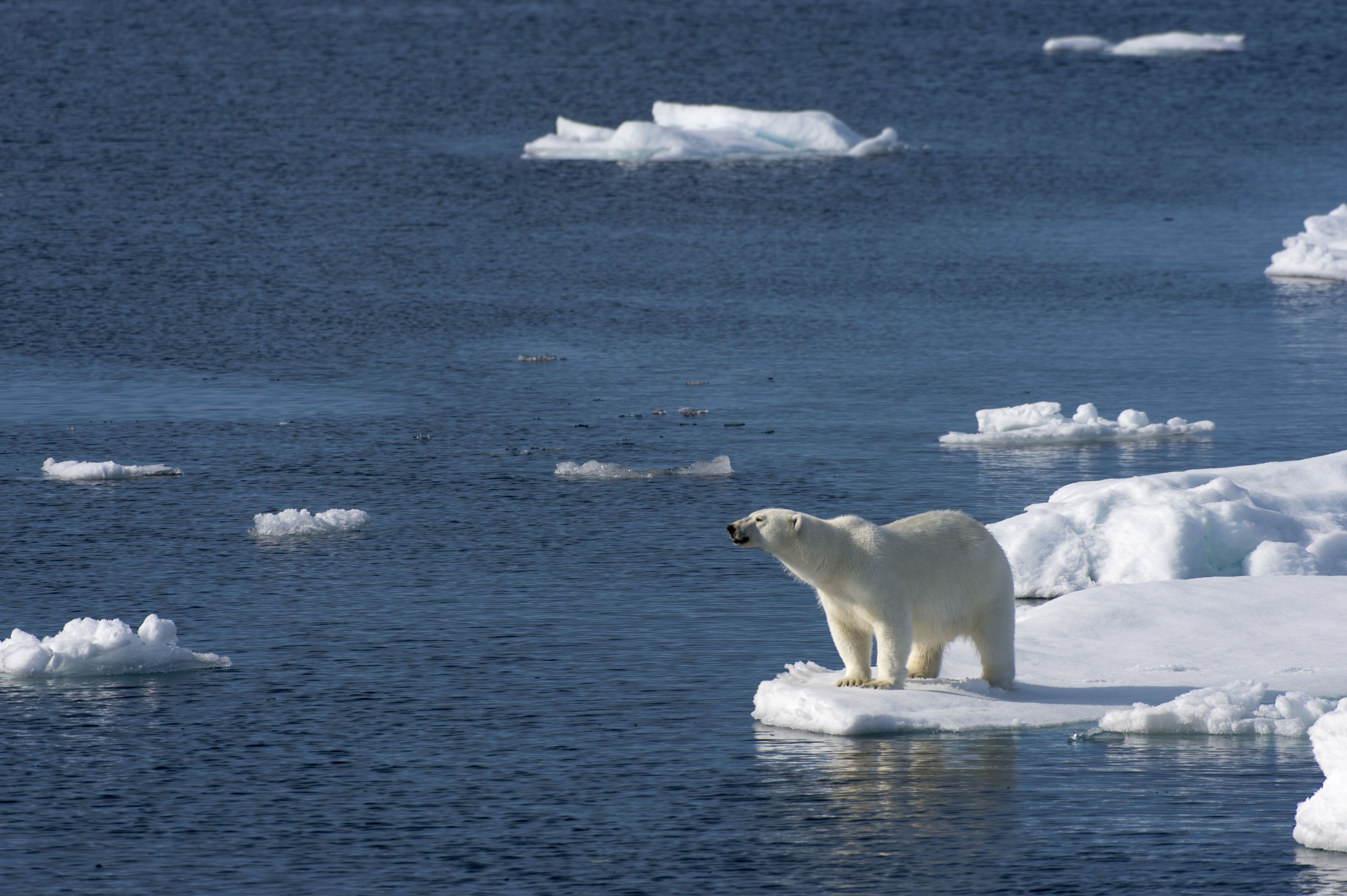 10 Amazing Facts About Polar Bears
