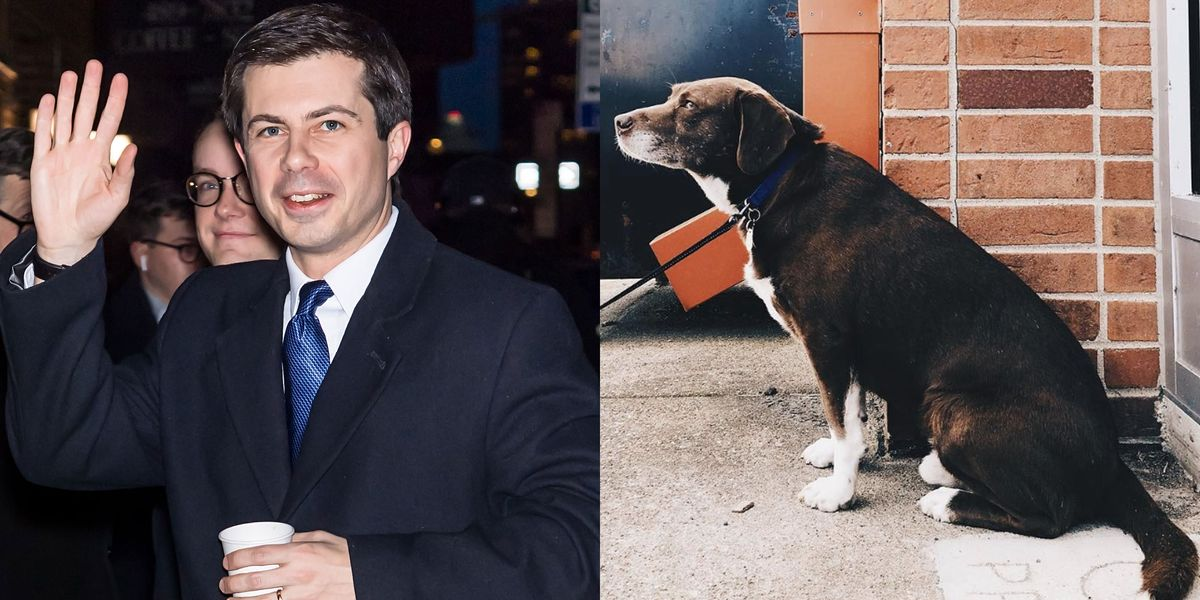 Why Do Pete Buttigieg S Dogs Have Better Social Media Game