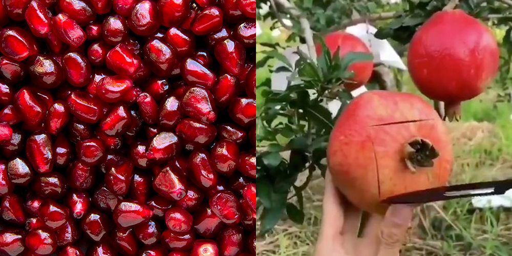 This Pomegranate Hack For Getting The Seeds Out Will Change Your Life