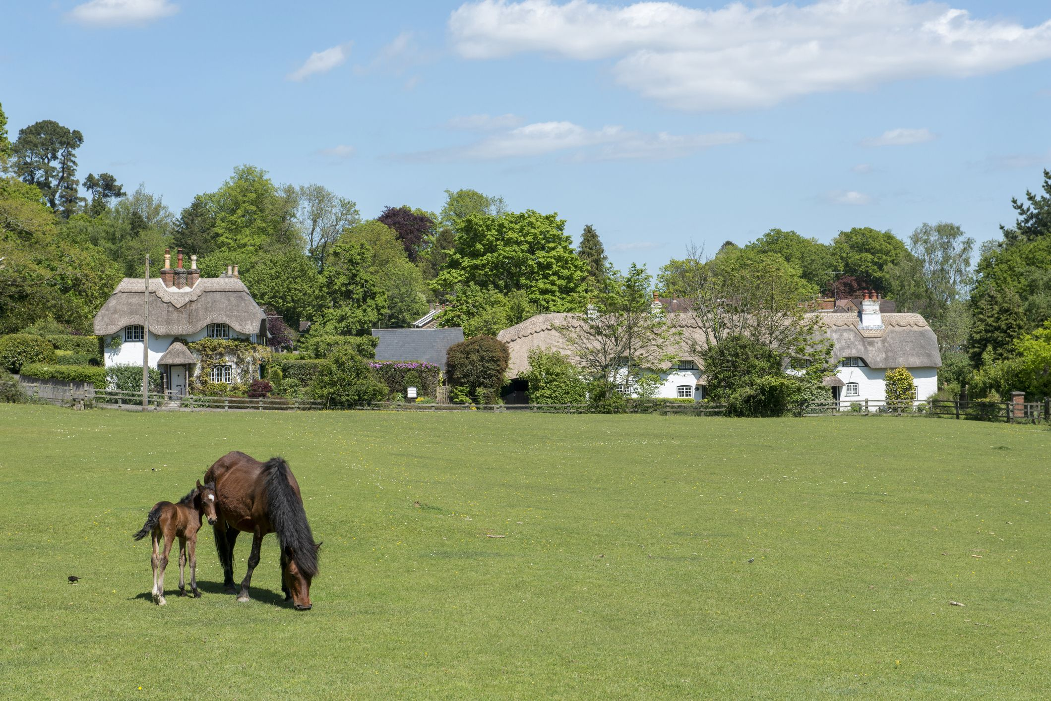 Experience the New Forest in all its glory at this Lyndhurst holiday cottage